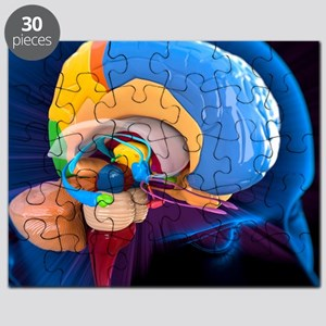 Human brain anatomy, artwork - Puzzle